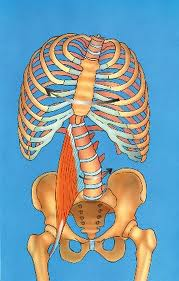 Psoas Causing Rotation of the Lumbar Spine