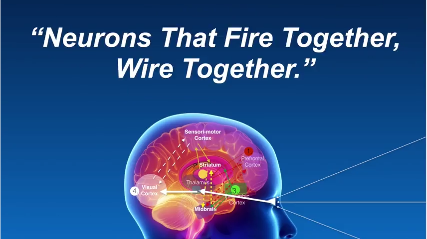 Neurons that fire together, wire together a concept in Nu-Schroth